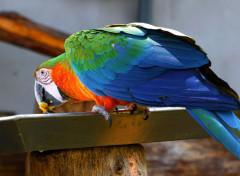 Animals Perroquet