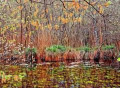 Nature Printemps aux étangs 1