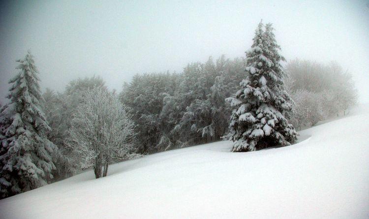 Wallpapers Nature Saisons - Winter Wallpaper N°463370