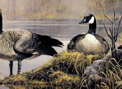 Art - Painting Oies bernaches du Canada