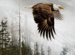 Art - Peinture L'aigle à tête blanche