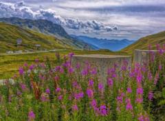 Nature Alpes