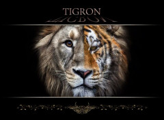 Animals tigron
