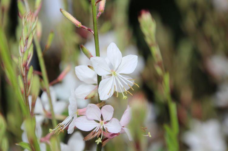 Fonds d'écran Nature Fleurs Wallpaper N°479369
