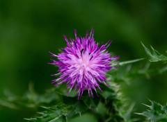 Nature Nature - Fleurs