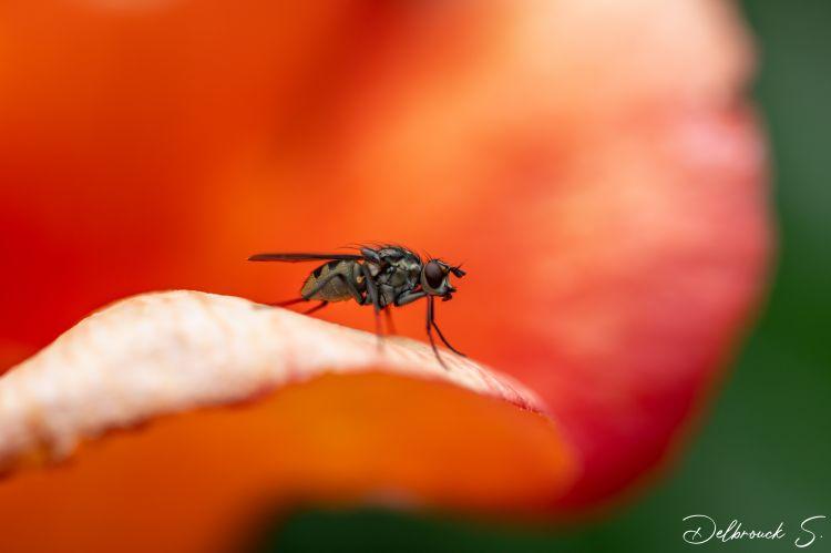 Fonds d'écran Animaux Insectes - Divers Wallpaper N°479671