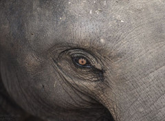 Animaux Elephants d'Asie en Thailande