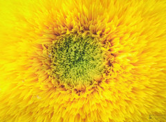 Nature Macro de fleur colorée