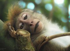 Animaux Gros plan singe asiatique