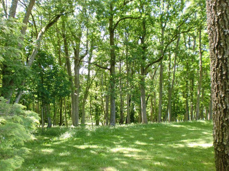 Fonds d'écran Nature Arbres - Forêts Détente dans le sous-bois