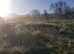 Nature toile dans la brume