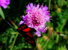 Animaux Papillon rouge
